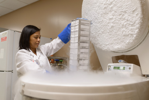 Dr. Catherine Flores works in the lab at the McKnight Brain Institute