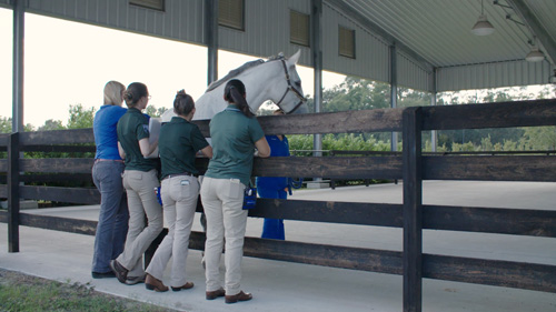 Ali Morton, D.V.M., left, stands with three veterinary students in the UF Equine Sports Medicine Performance Arena while they study the gait of a horse.
