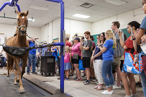 The annual open house at the UF College of Veterinary Medicine drew a huge crowd once again this year, with an exhibition of the comprehensive treatment available for sick or injured horses. — Greg Hamilton